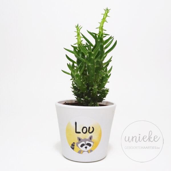 Stickertje Lou op cactus