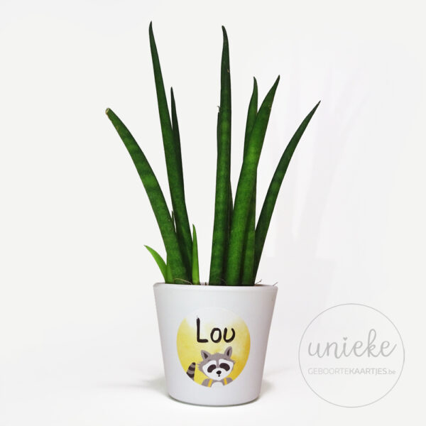 Stickertje Lou op plantje