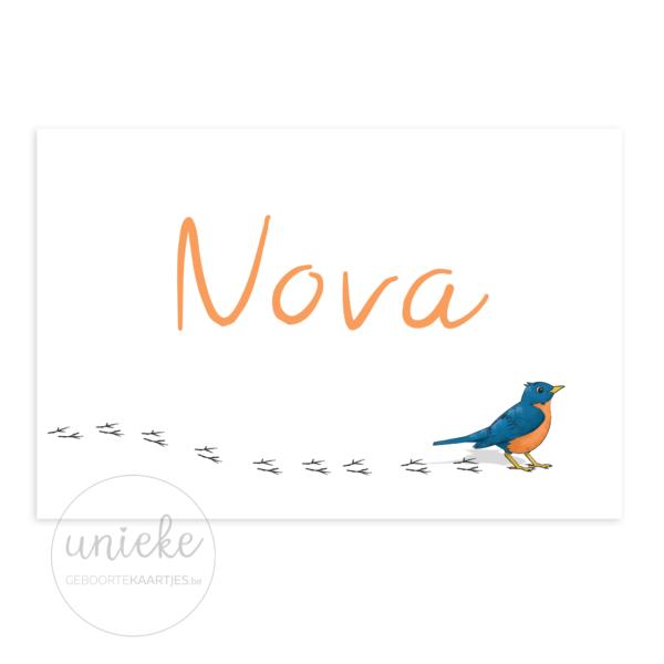 Voorkant van het kaartje van Nova